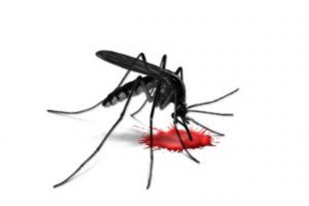 Razem przeciw malarii