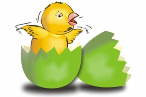 Kurczęta biorą się z żółtka