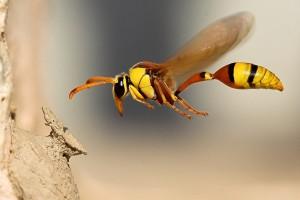 Latają zagrożenie: uczulenie na jad owadów
