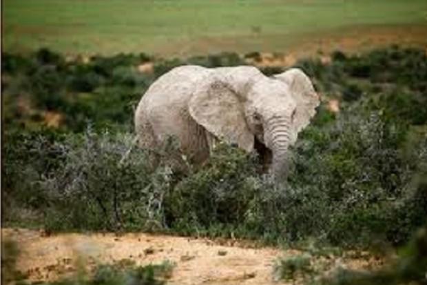 Birma: biały słoń to dobry znak w polityce