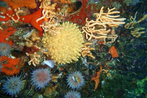 Morskie gąbki pod mikroskopami badaczy