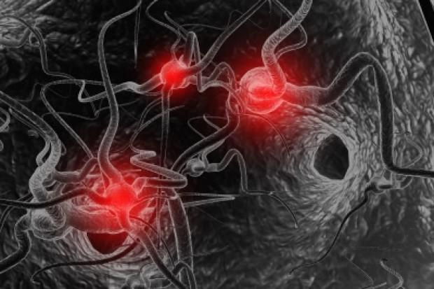 12 podklas komórek gleju -  oligodendrocytów