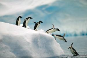 Lekarze - pielgrzymi będą podglądać pingwiny