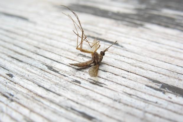Przypadki malarii opornej na jakiekolwiek leczenie