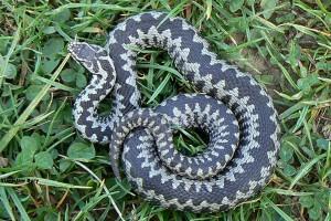 Lekarze Bez Granic: topnieją zapasy antidotum na jad węży