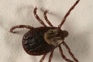 Hiszpania: zgon z powodu wirusa gorączki krymsko-kongijskiej