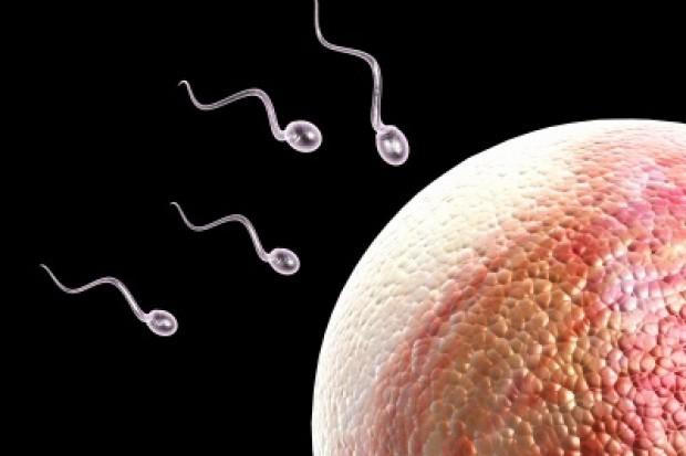 Senacka komisja zdrowia chce odrzucenia ustawy o in vitro