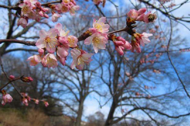 Jurajska Wiosna Farmaceutów