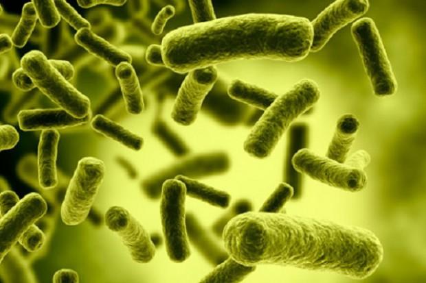 Białka probiotycznych bakterii niwelują reakcję alergiczną