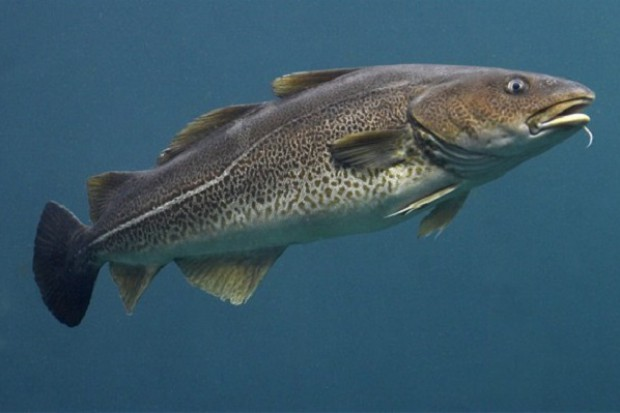 Jedzenie ryb we wczesnym dzieciństwie zmniejsza ryzyko astmy