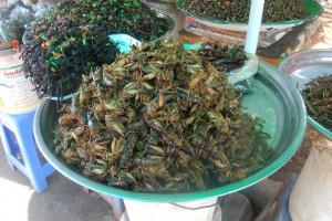FDA: wprowadzenie owadów jako elementu diety ludzkiej nie będzie łatwe