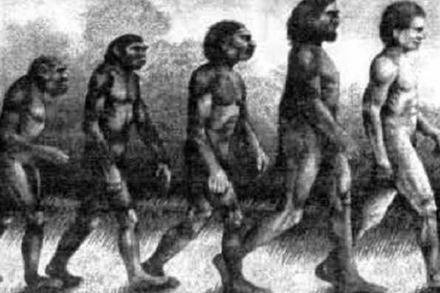 Węglowodany pomogły w ewolucji ludzkiego mózgu