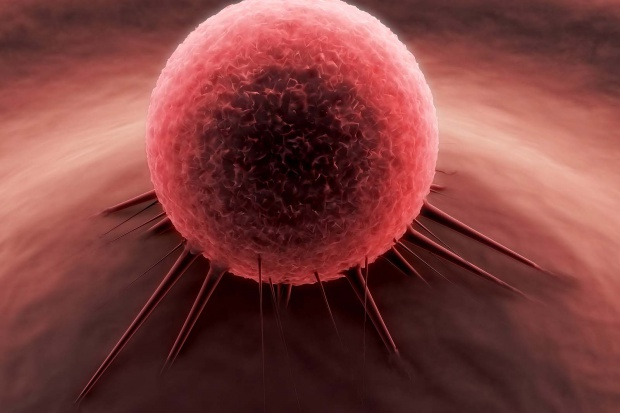 Nanolipidy z imbiru lepiej dostarczają lek do nowotworów jelita