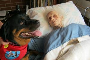 Dogoterapia – najskuteczniejszy lek na Alzheimera?