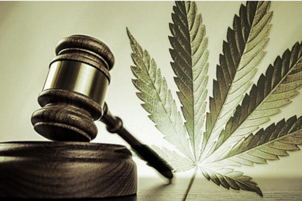 Łódź: kandydaci zgodni – marihuana lecznicza wygrywa wybory
