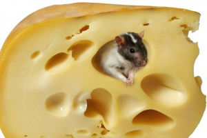 Żółty ser uzależnia jak kokaina