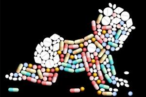 Nawet pojedyncza dawka antybiotyków zmienia mikrobion