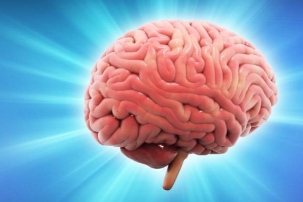 """Japończycy pokazali """"szczęśliwy"""" mózg"""