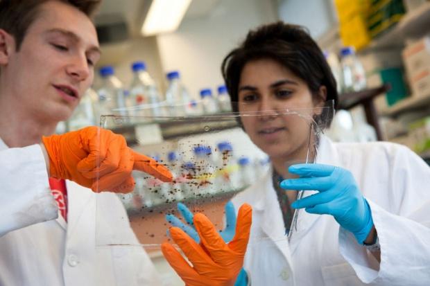 Naukowcy grzebią w ziemi i szukają antybiotyków