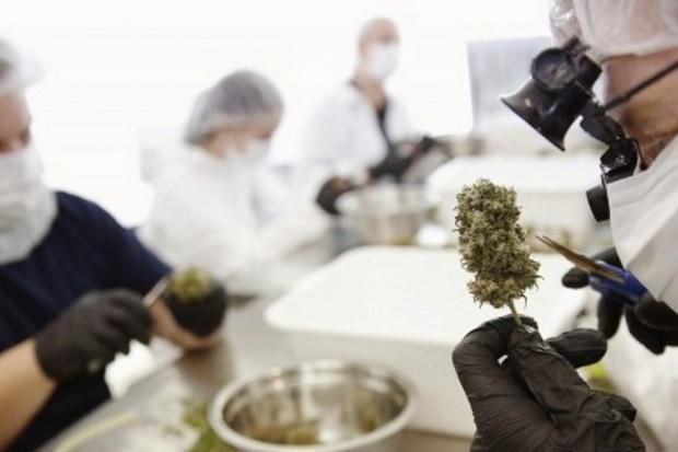 Jarosław Pinkas: marihuana lecznicza nie istnieje
