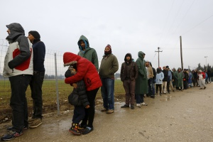 Błonica do Danii przybyła z uchodźcami