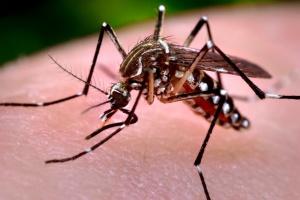 Kraje zagrożone wirusem zika powinny chronić się przed komarami