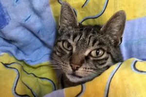 Kot - przyjaciel, lekarz i terapeuta