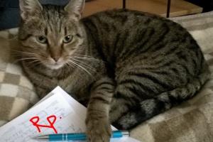 Felinoterapia, czyli leczenie kotem