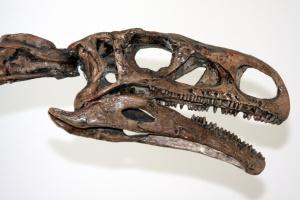 Polacy odkryli naczynia krwionośne z białkami sprzed 250 tys. lat