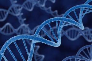 Mutacja BRCA1/2 zwiększa ryzyko zachorowania na raka jajnika i piersi