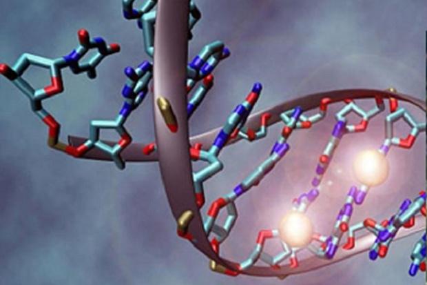 Chromosomy zawierają mniej DNA  niż sądzono