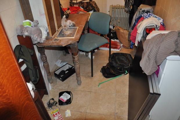 Gdynia: ukradli leki z kociego hospicjum