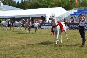 Janów: antybiotyki w paszy koni przyczyną ich zgonów?