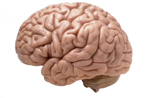 Leki powodują kurczenie się mózgu?
