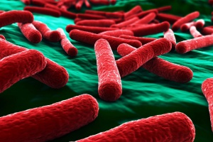 Sanepid ostrzega przed superbakterią