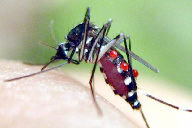 Francja idzie na wojnę z komarem tygrysim