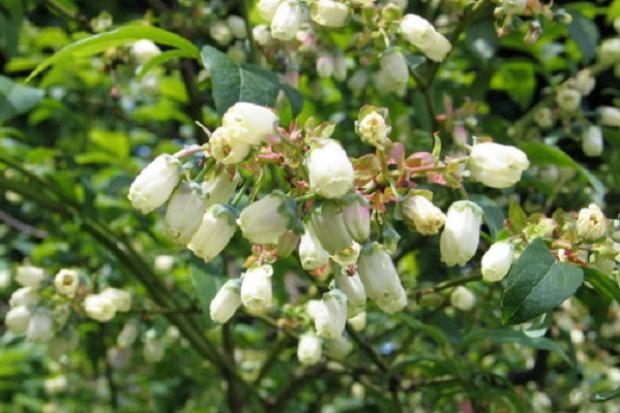 Dni Otwarte Ogrodu Roślin Leczniczych GUMed