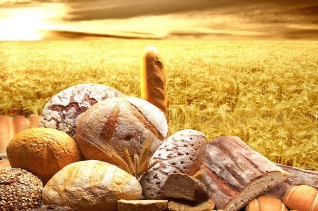 Badania: białka z pszenicy mogą tworzyć w organizmie stany zapalne