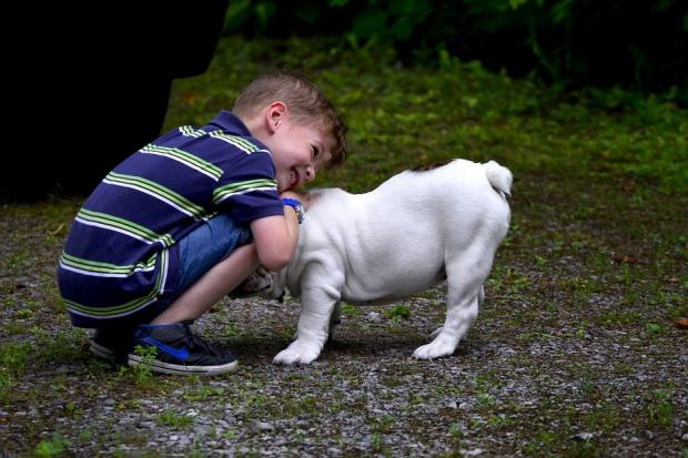 Małe dziecko i pies? To bardzo zdrowe połączenie