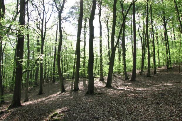 Leśnia terapia poprawia zdrowie