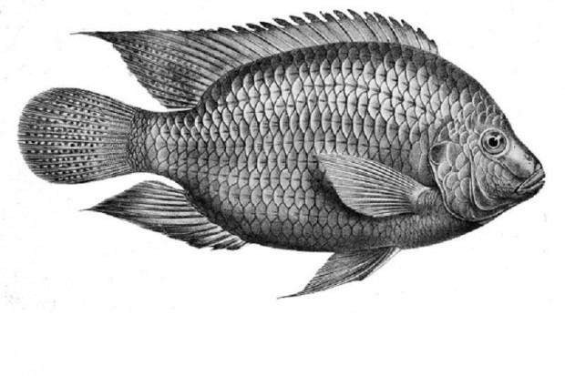 Brazylia: opatrunek z rybiej skóry