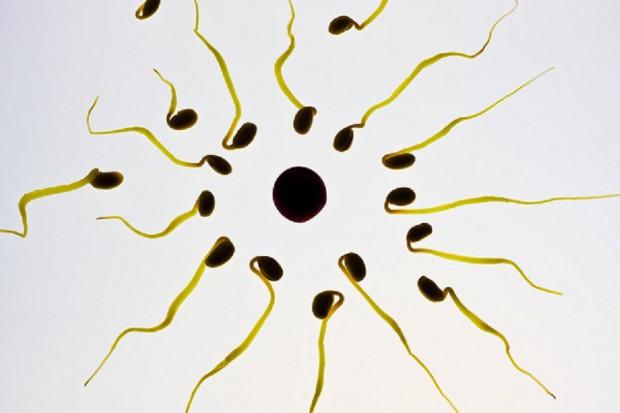 Badanie: spada jakość męskiego nasienia