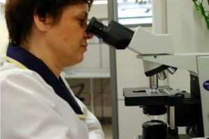 Inspekcja Sanitarna: 40 tyś. jaj zanieczyszczonych fipronilem