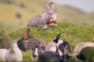 MZ zachęca do rozmnażania się jak króliki. Za 3 mln zł