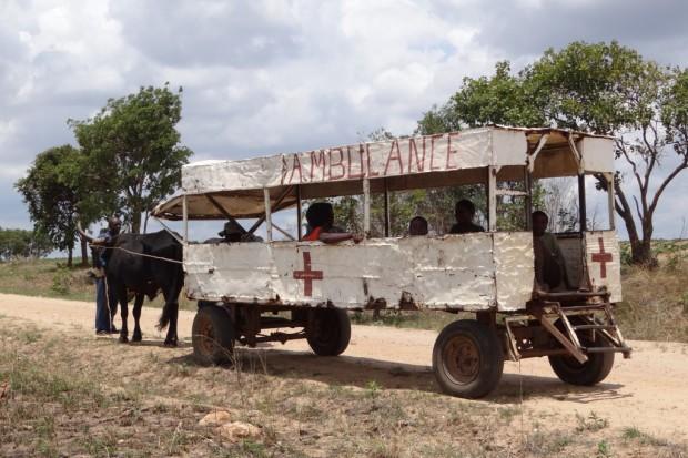 Madagaskar: wybuch epidemii dżumy największy od 50 lat?