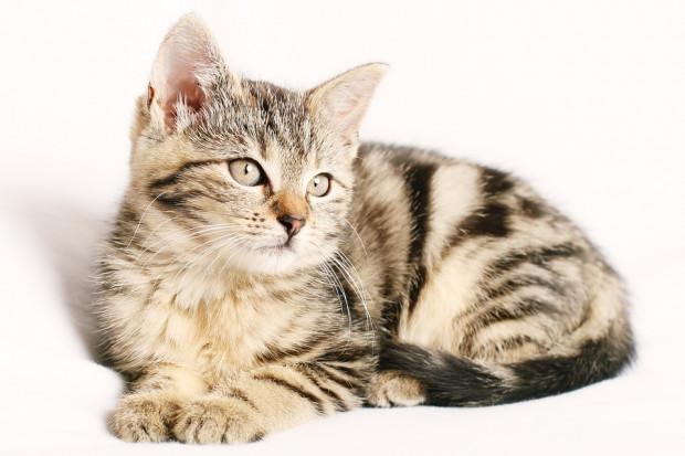 Czy można przenieść covid na swojego kota?