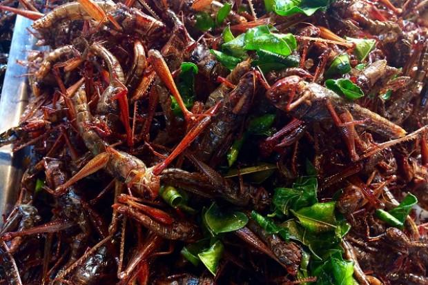 Jedzenie insektów pozytywnie wpływa na mikrobiom jelitowy