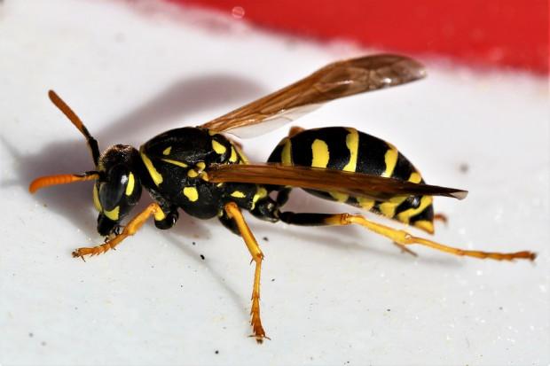 Przyczynową metodą leczenia wstrząsu anafilaktycznego w przypadku użądlenia przez owady jest immunoterapia