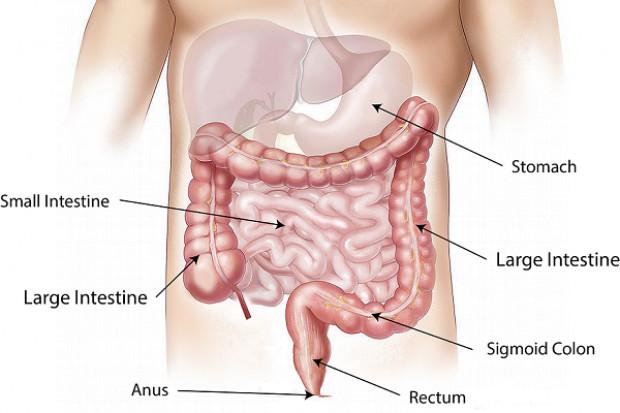 Mikrobiom jelitowy i jelito zmieniają się po udarze