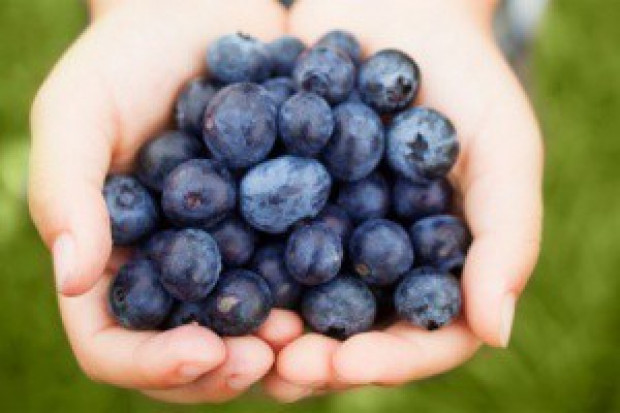 Badania: naturalny barwnik borówek może obniżać ciśnienie tętnicze